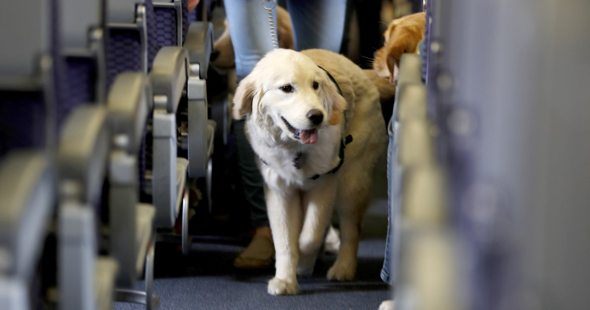 Dogs are the only service animals allowed to fly on passenger planes, DOT rules