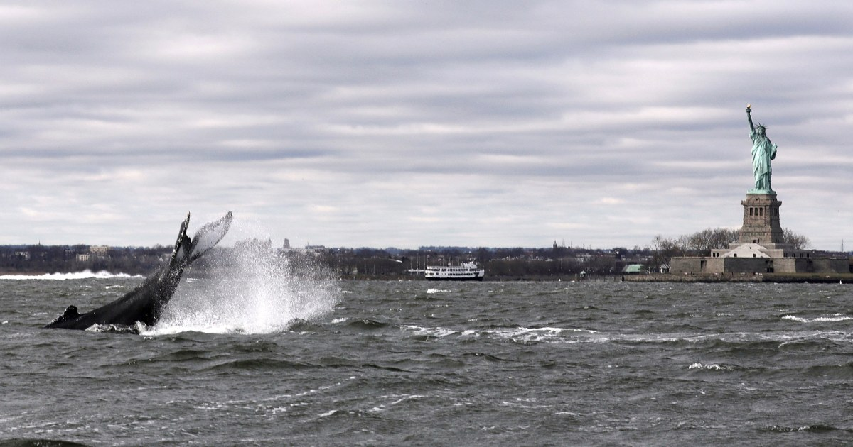 Humpback whale spotted in New York Harbor near Statue of Liberty