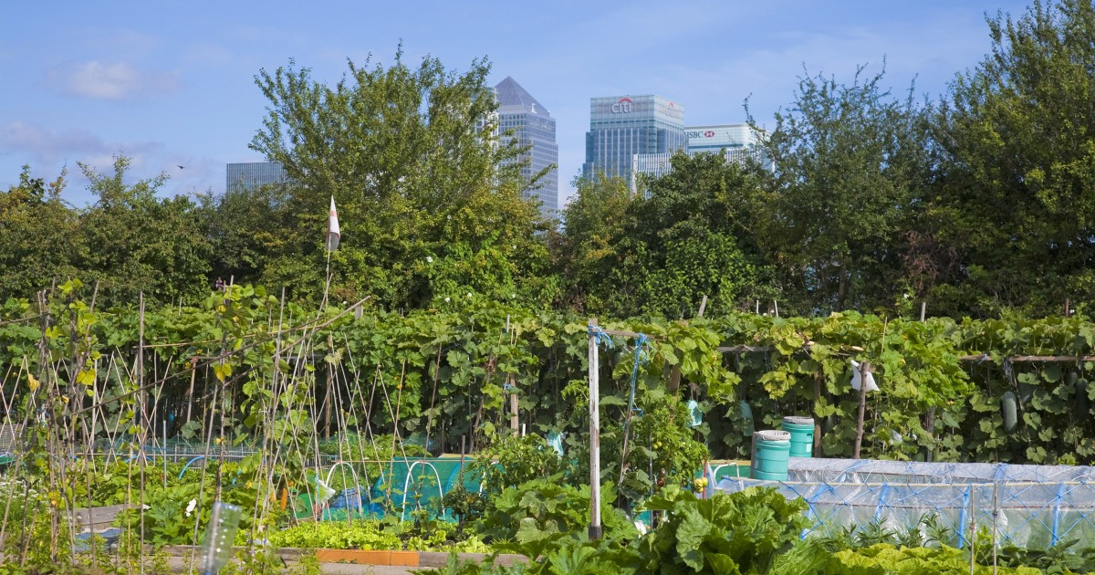U.K. Green thumbs grow demand for inner city gardening plots during pandemic