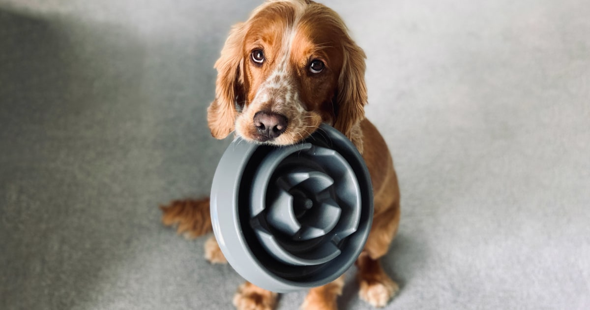 The best food for dogs, according to experts and veterinarians