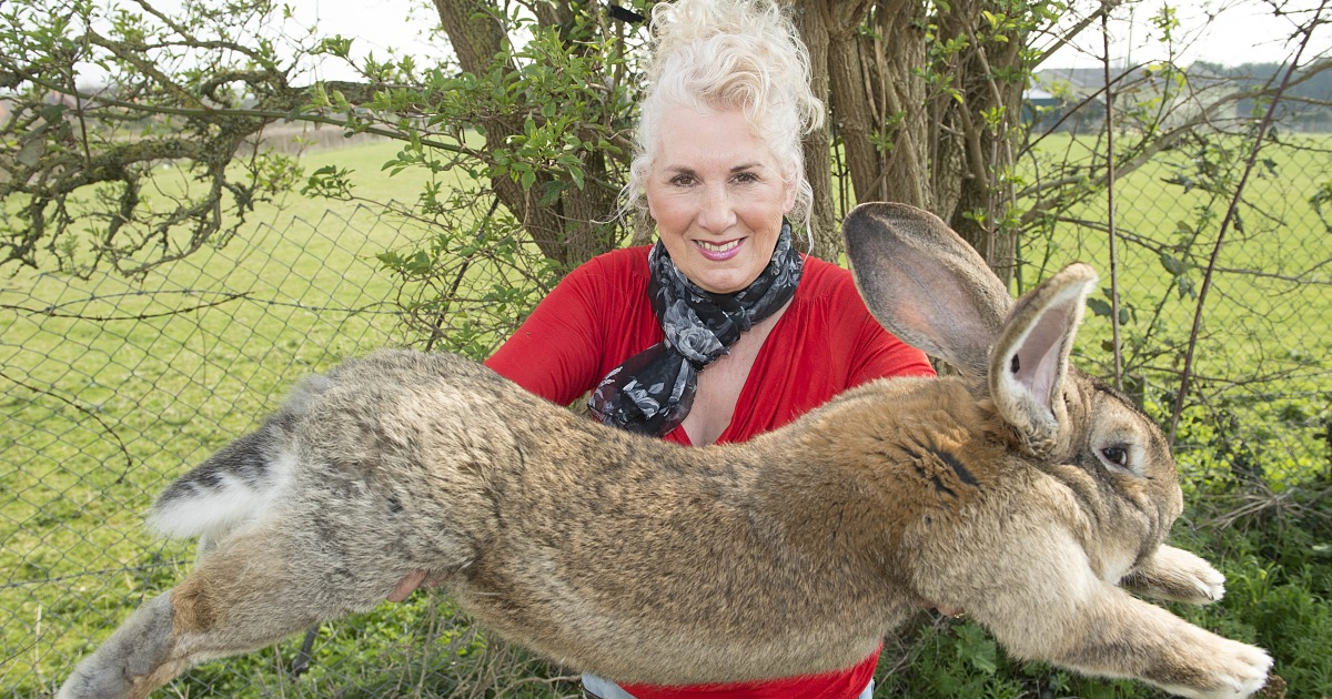 UK police hunt rabbit robber after the disappearance of the giant pet Darius