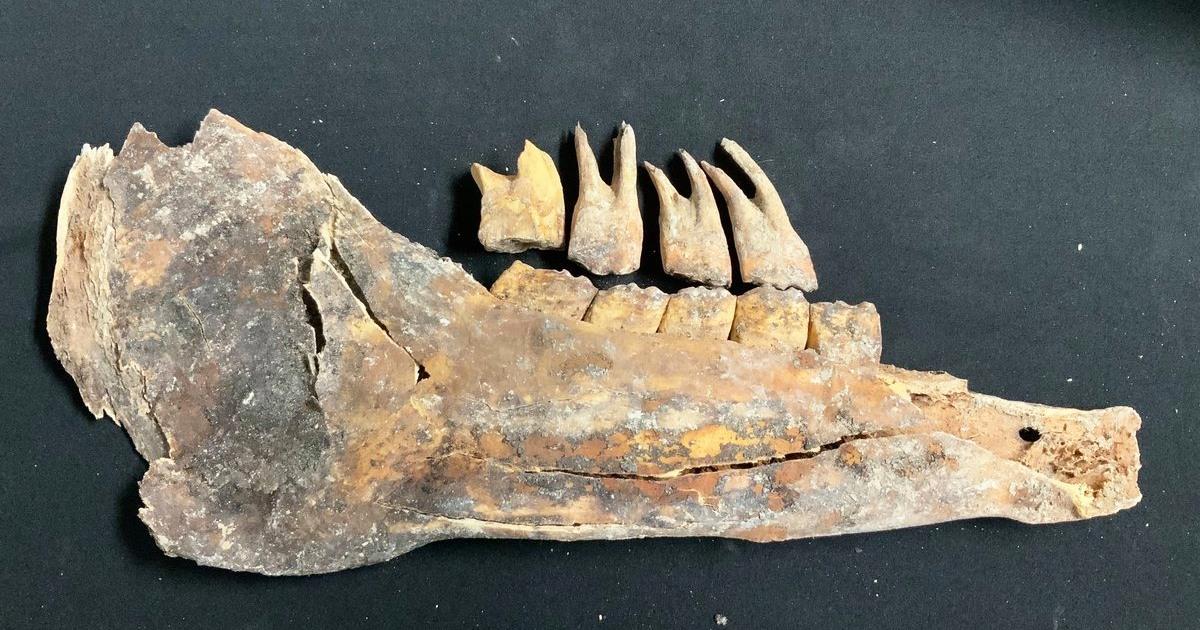Ice age-era bones found in Las Vegas backyard – NBC News