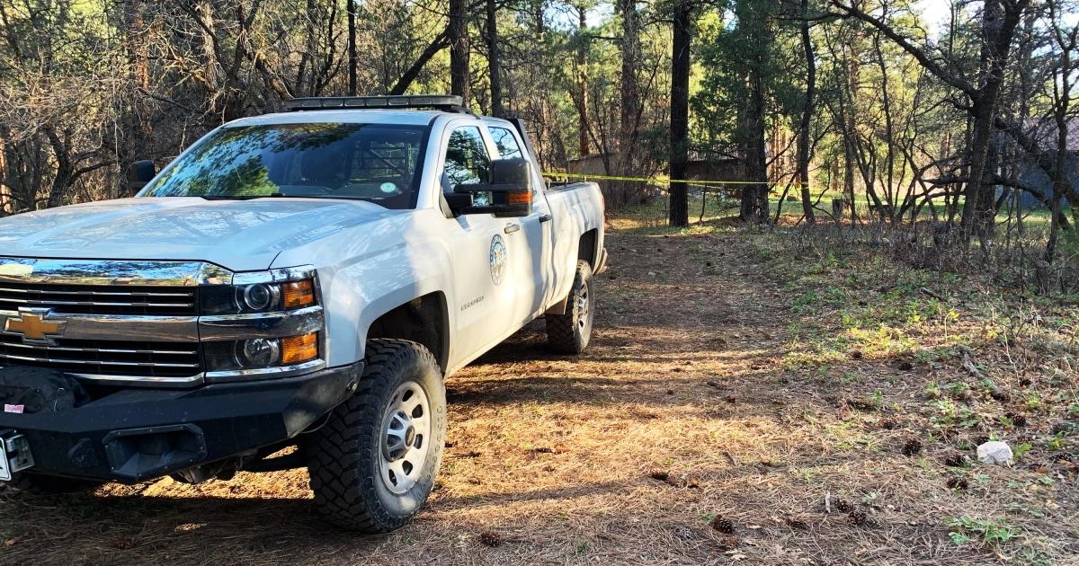 Colorado woman killed in rare bear attack – NBC News