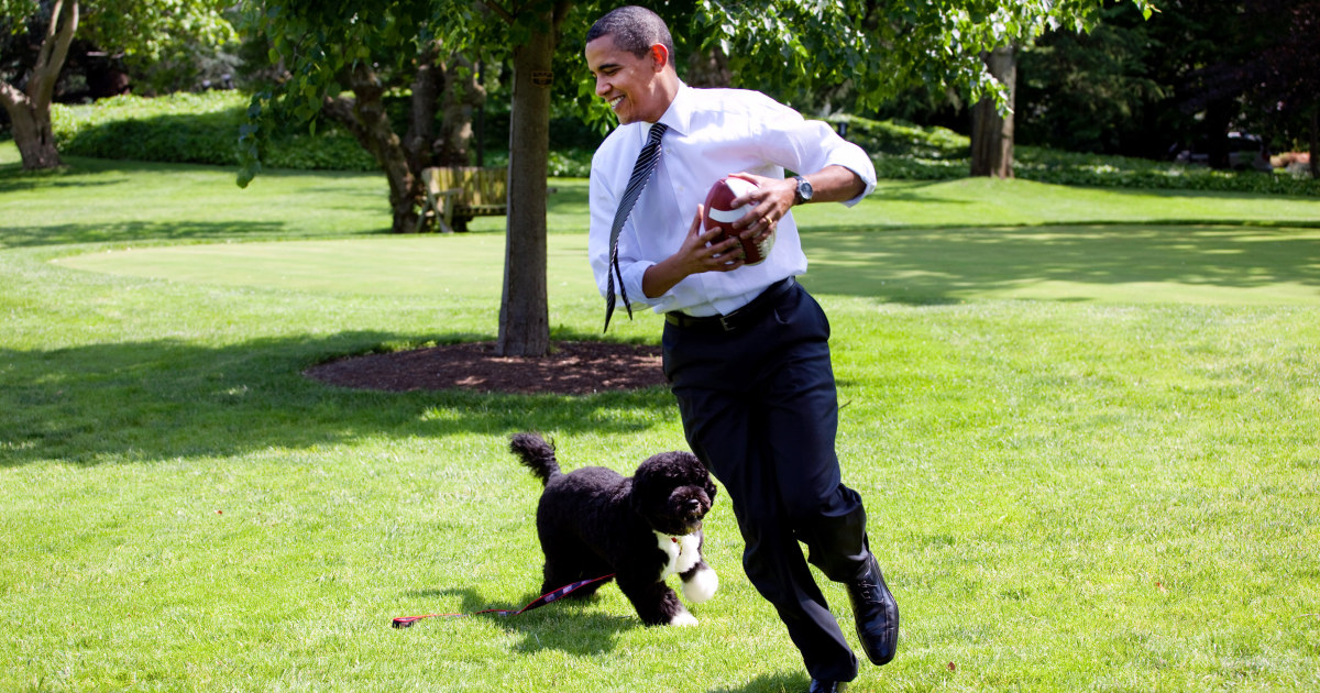 Obama announces death of former 'first dog' Bo – NBC News