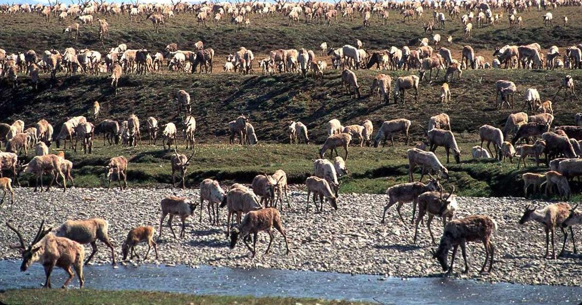 Biden suspends oil-drilling leases in Alaska's Arctic refuge – NBC News