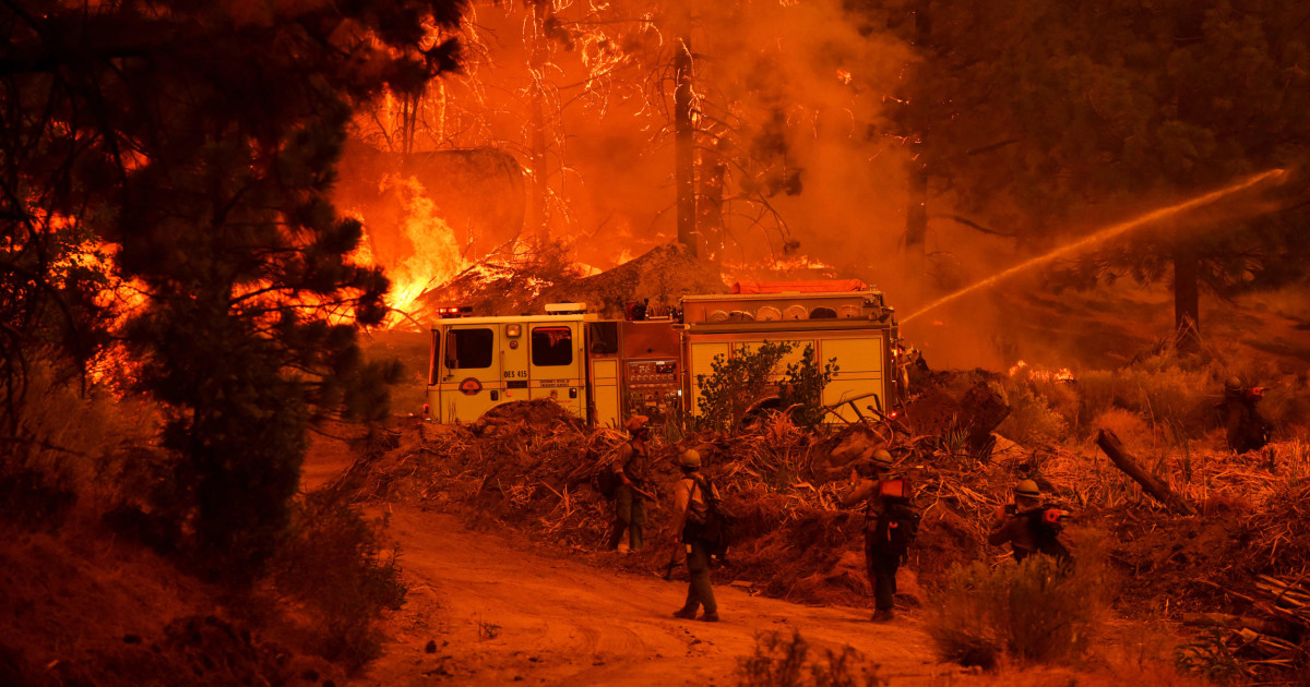 After California wildfire, thousands of trees to be removed