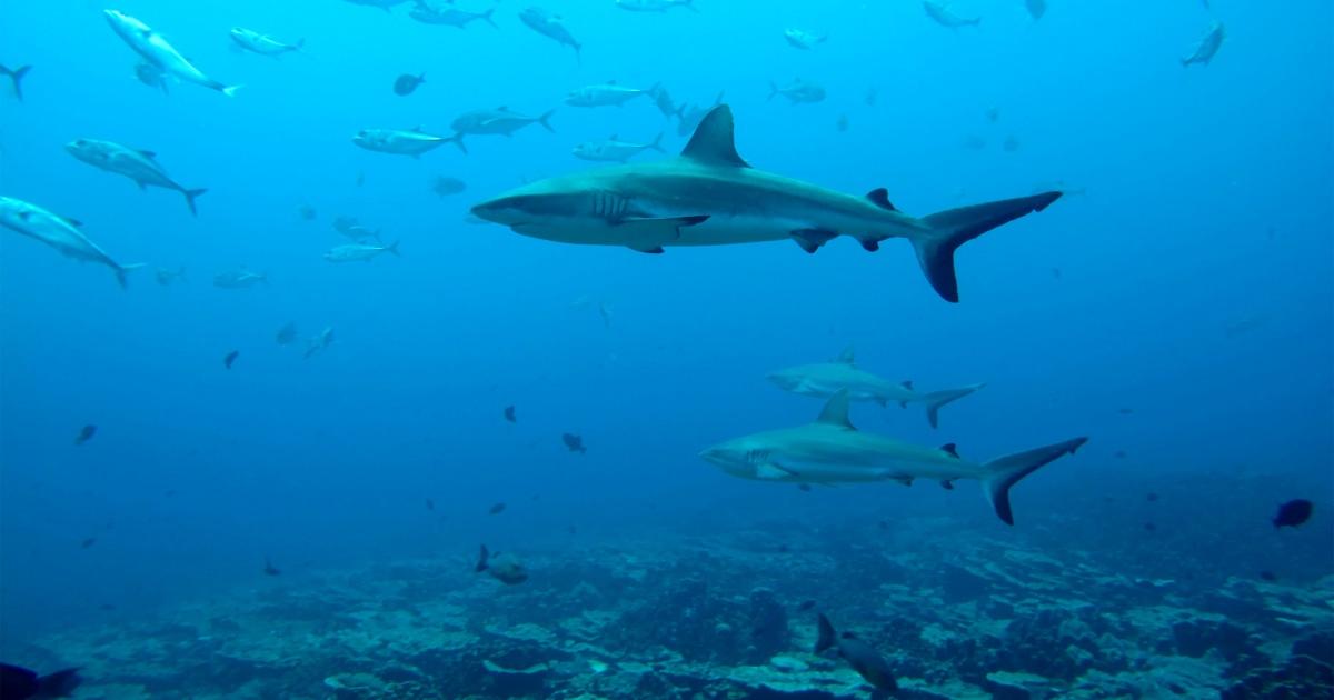 www.nbcnews.com: 'Secret' life of sharks: Study reveals their surprising social networks