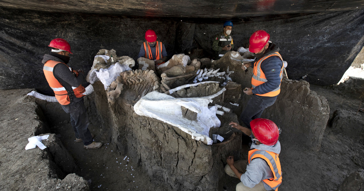 Airport construction in Mexico unearths more than 100 mammoth skeletons