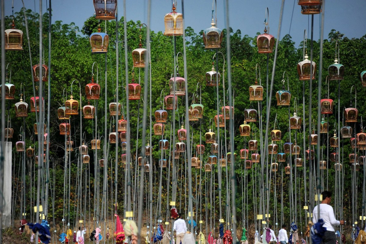 Image: Hanging bird cages are displayed on poles during a bird-singing contest