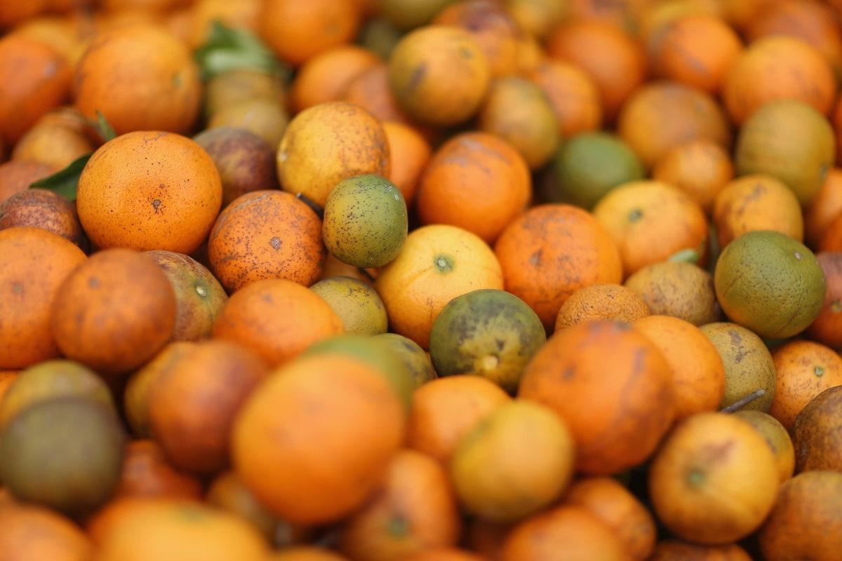 Citrus county florida singles dating websites