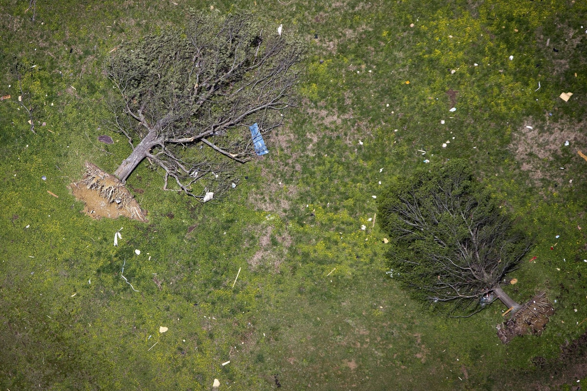 Image: Uprooted trees are pictured after a tornado hit Vilonia, Arkansas