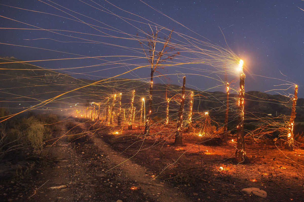 Image: A long exposure image of embers flying off burnt trees following the wind driven wildfire ranging in the mountain area near Rancho Cucamonga