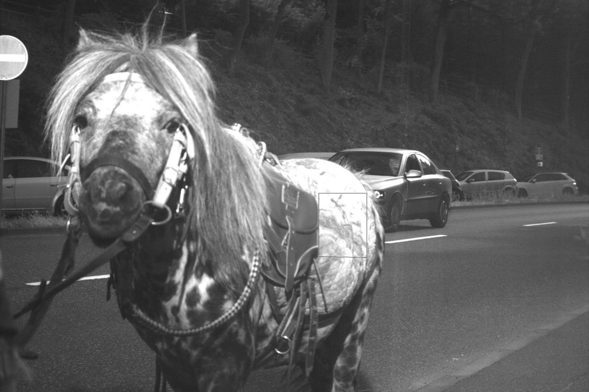 Image: A horse was caught by a German speed camera going at of 36 mph in a 31 mph speed zone