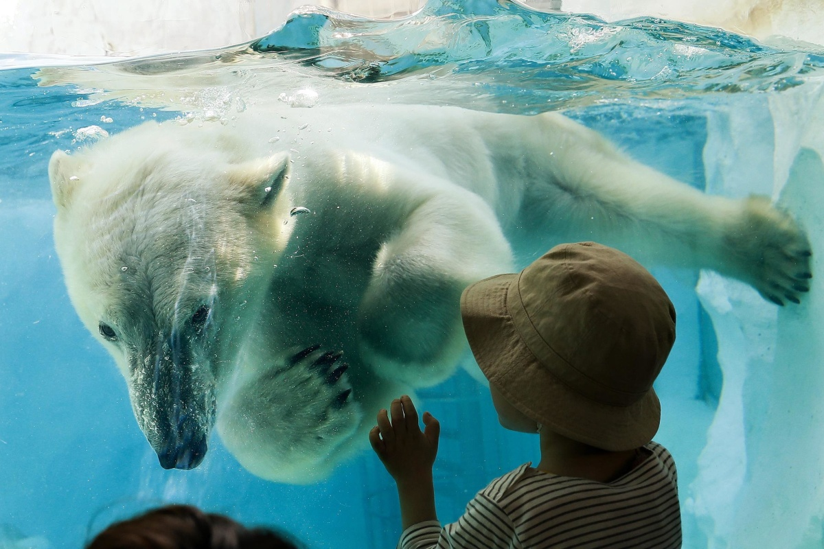 Image: A polar bear looks at a little boy as it swims in its enclosure's pool at Ueno Zoo in Tokyo, Japan