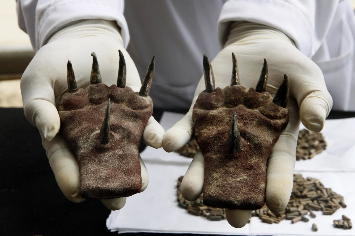 Image: Moche claws