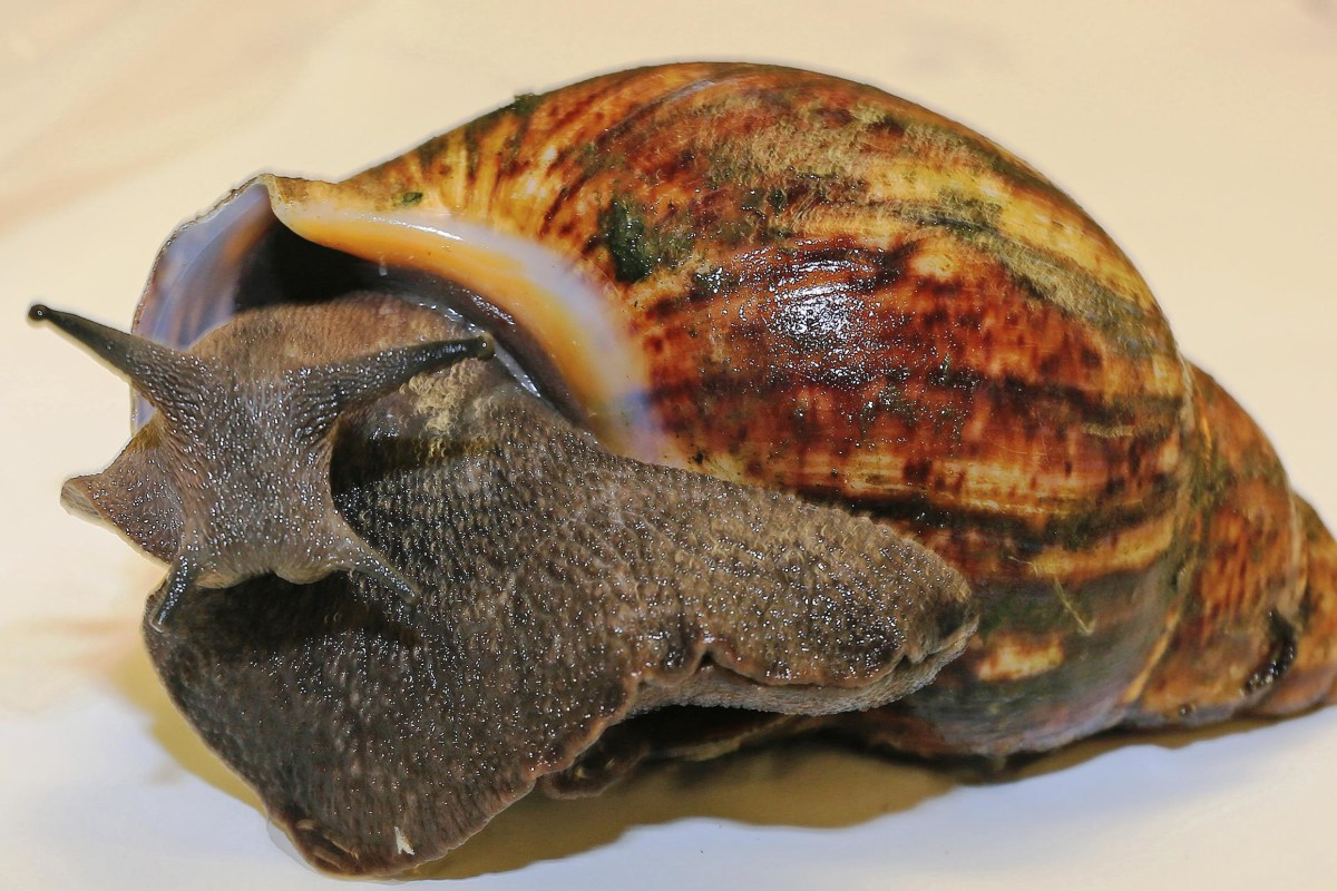 Confiscated snails