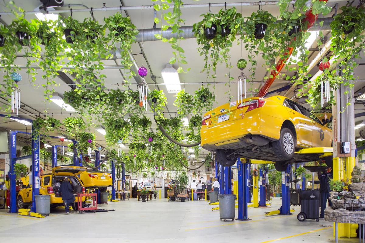 Image: Garage plants