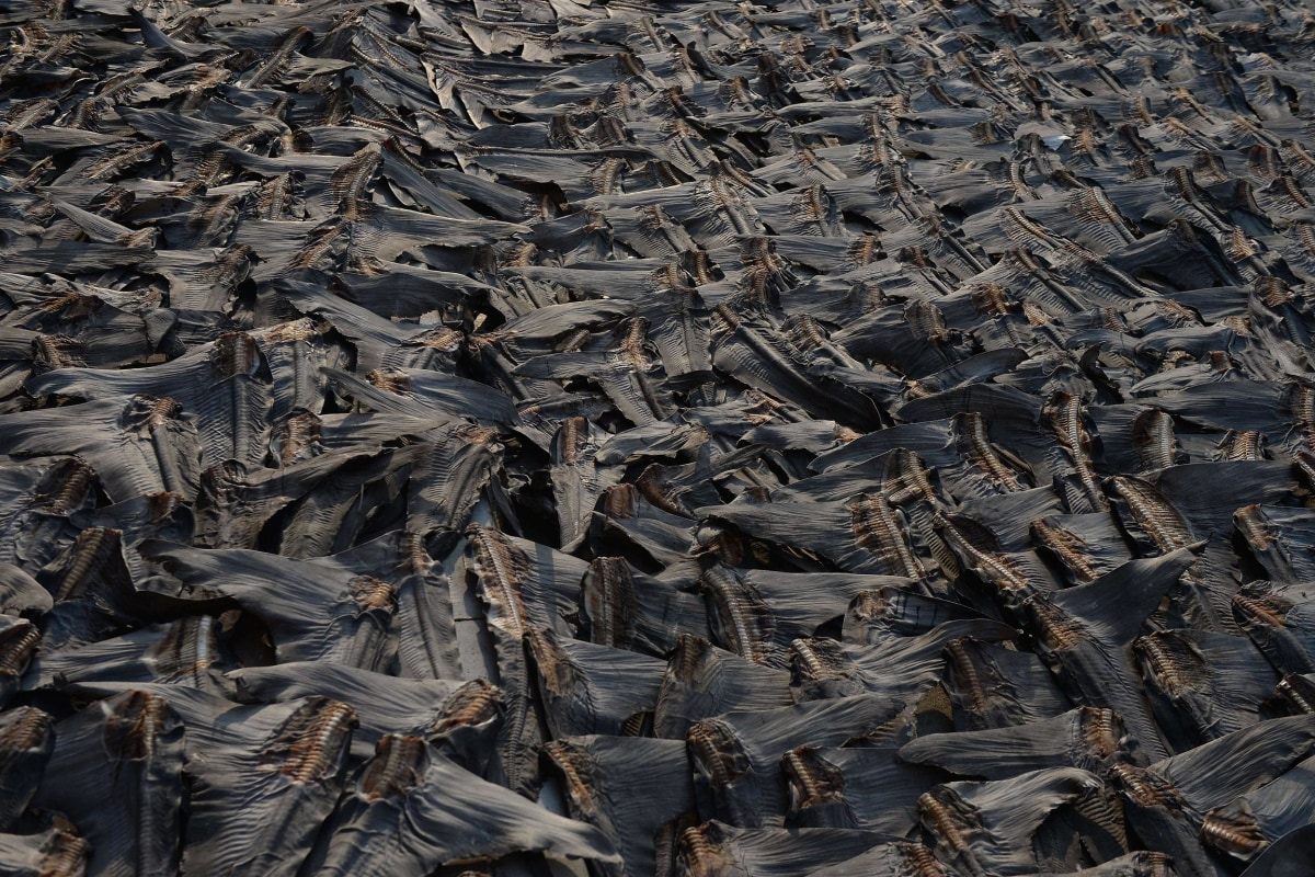 Image: Shark fins dry on a road in Hong Kong on July 30