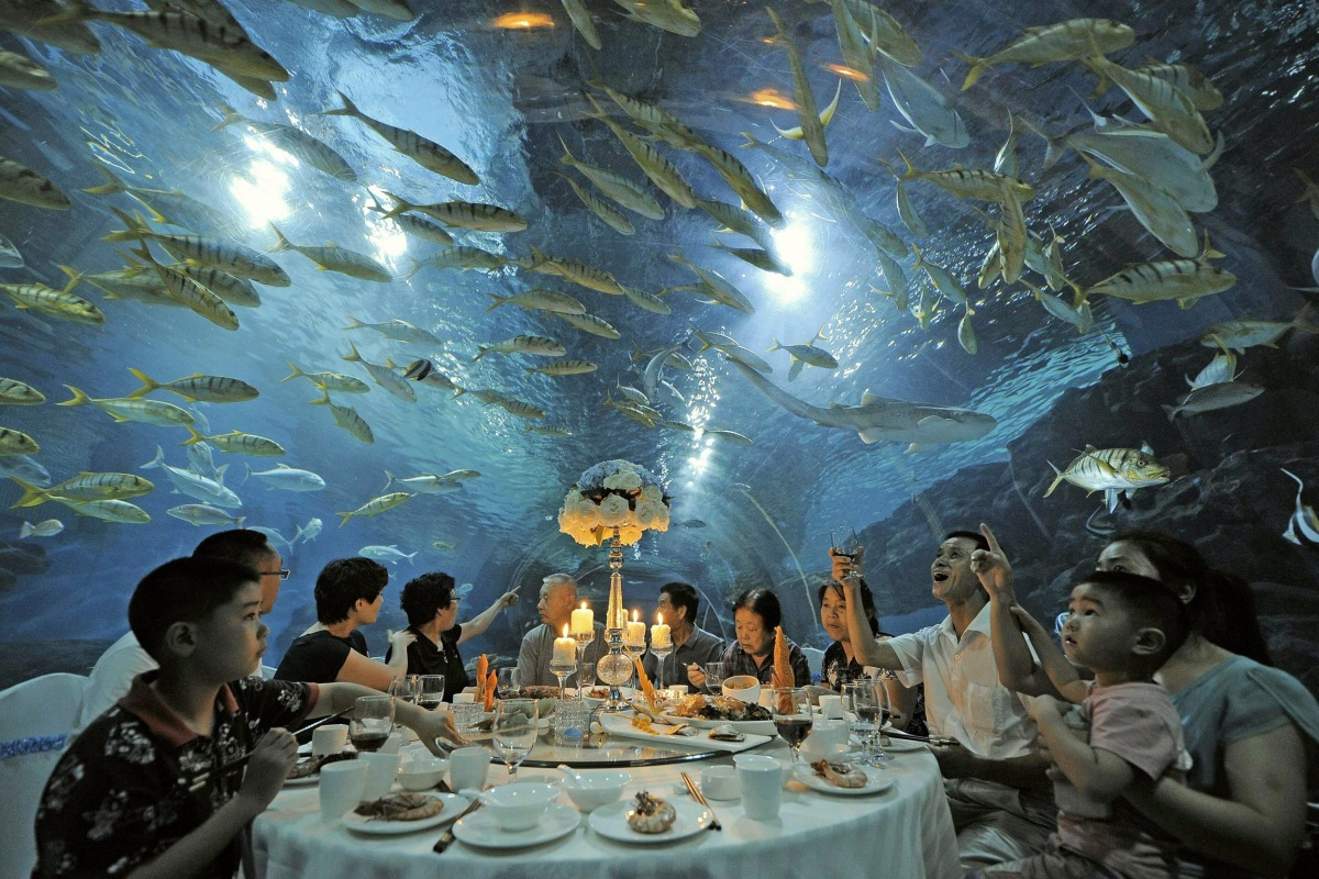 Image: Tourists have dinner as fish swim around them, at the Tianjin Haichang Polar Ocean World in Tianjin