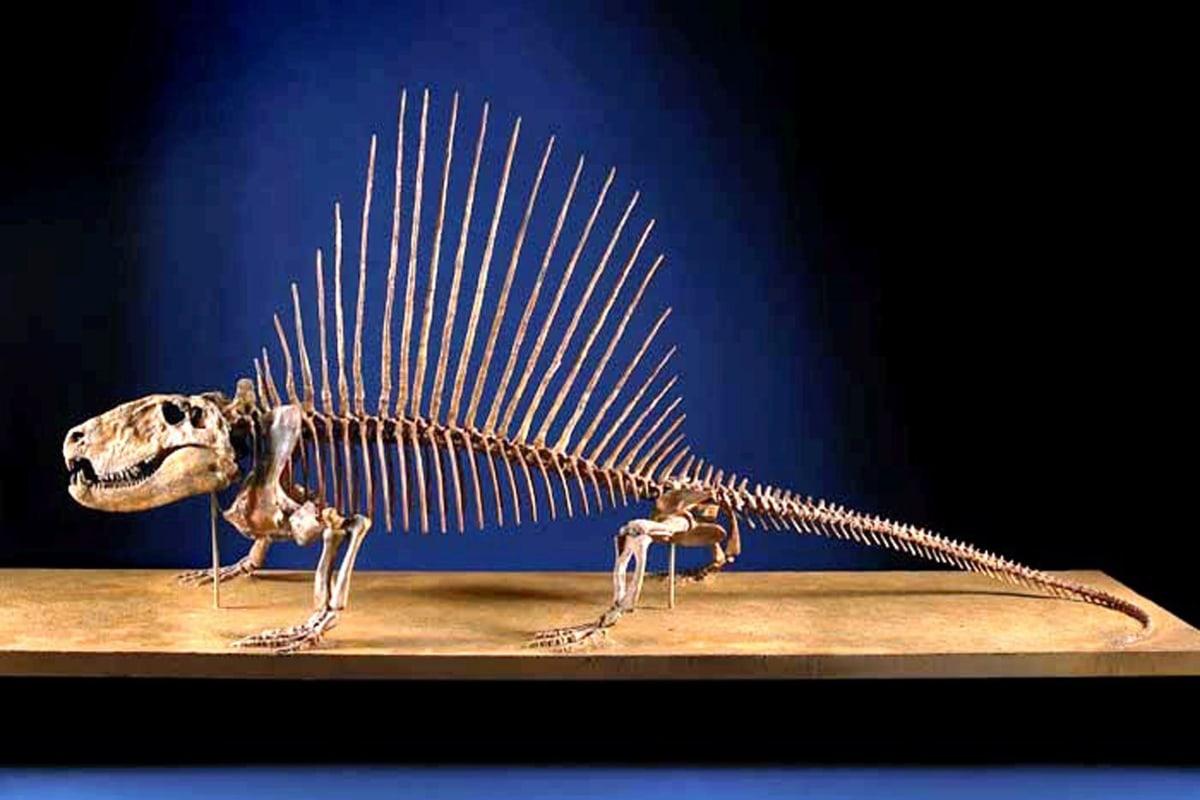 Image: Dimetrodon