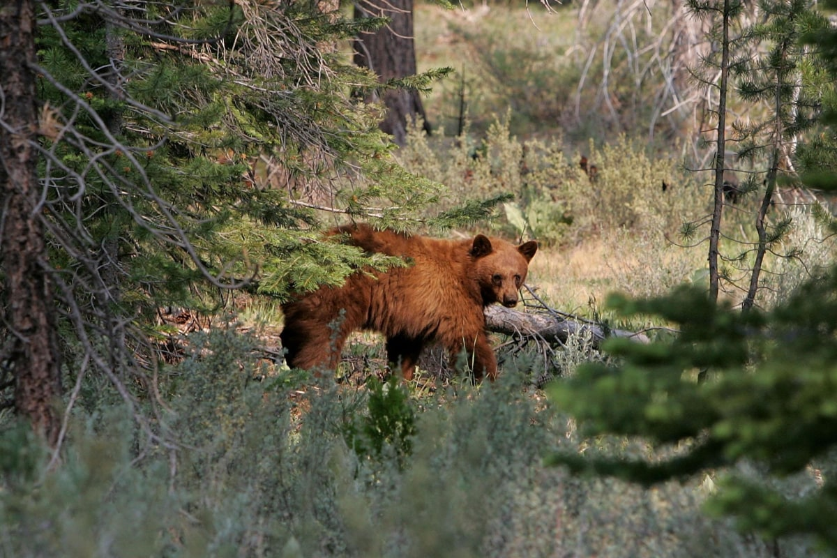 Surge in Bear Selfies Could Lead to a Grizzly End: Forest Service - NBC News