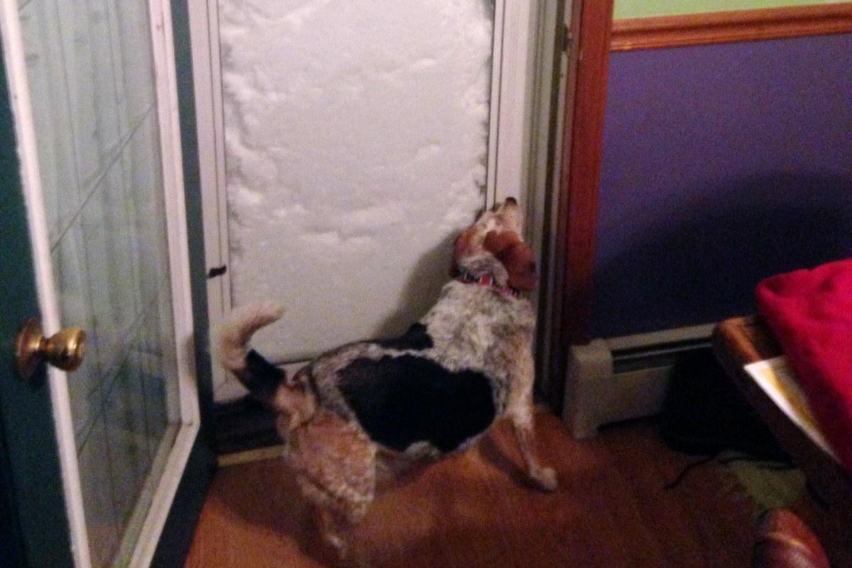 Image: Bonnie the dog