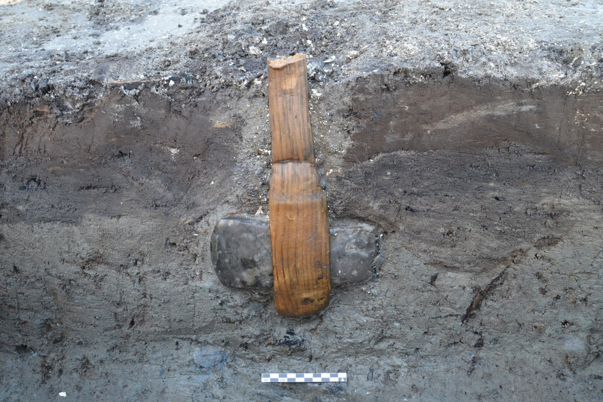 Image: A Stone Age ax, with its wooden handle well-preserved, is embedded in clay on the Danish island of Lolland
