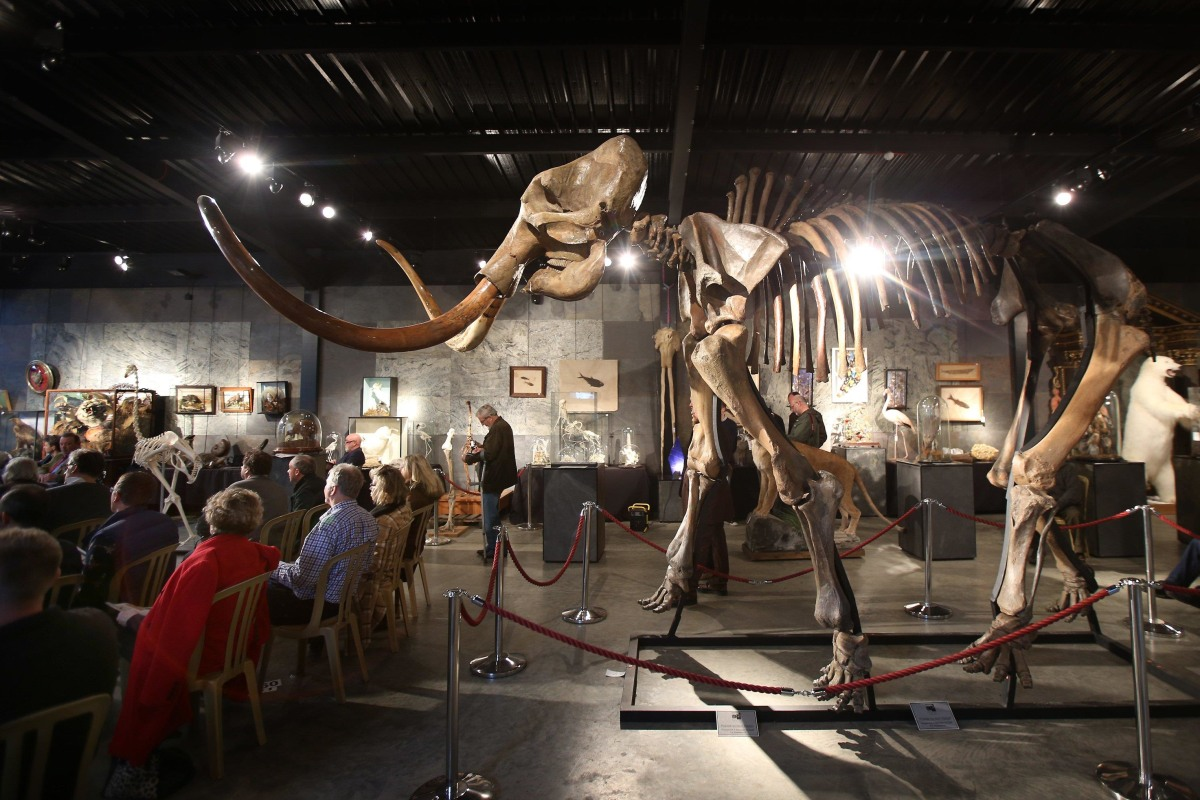 Image: Mammoth auction