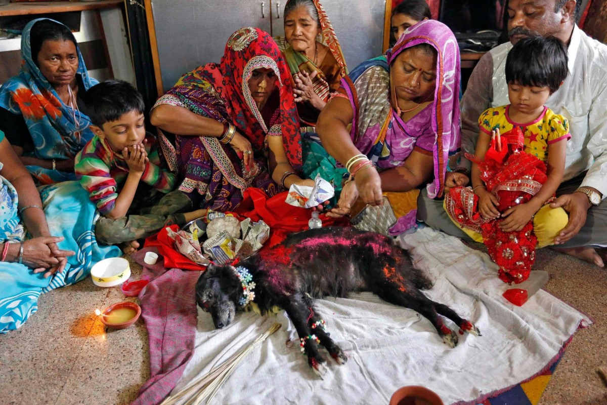 Image: A woman pours vermillion powder on the body of Sonu, a female stray dog, as part of a ritual before her burial in Ahmedabad