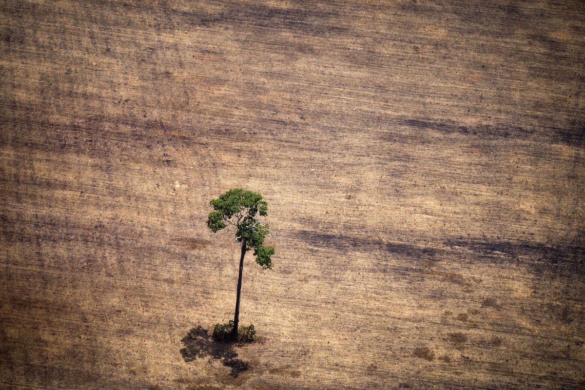Image:  Lone tree stands in a deforested area in the Amazon jungle in Brazil