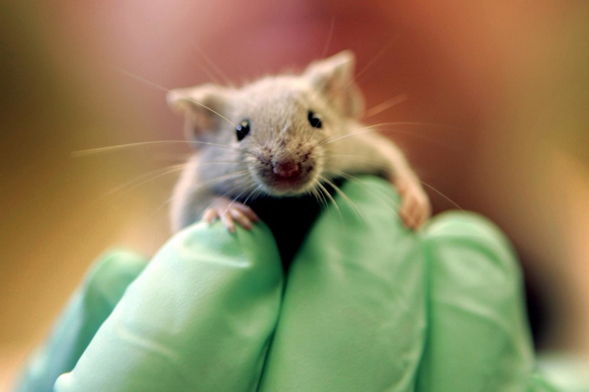 More Animals Used in Lab Experiments, Study Finds