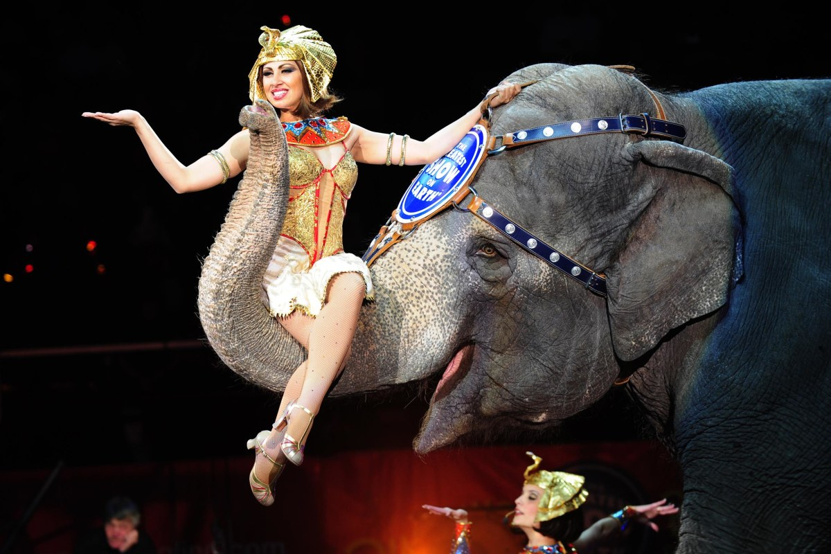 Image result for ringling brothers
