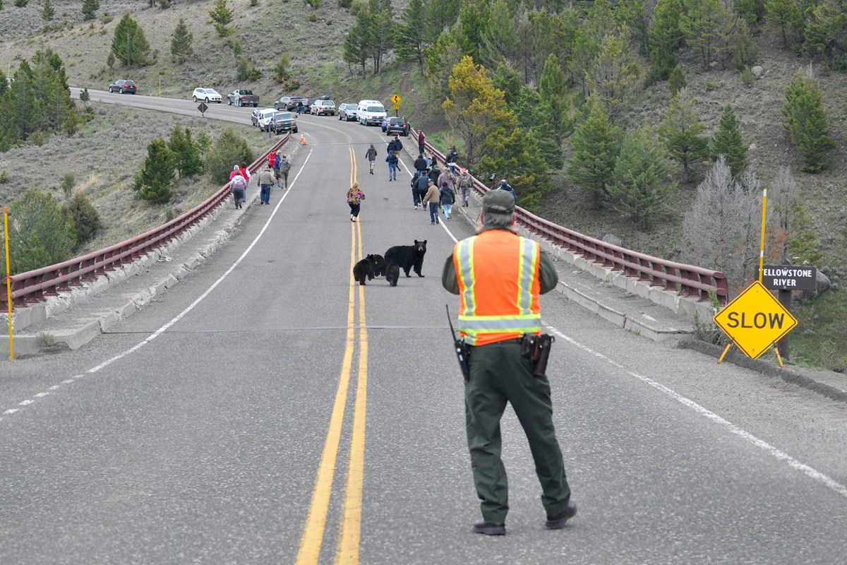 hispanic single men in yellowstone national park Hispanic & latino military heritage this site is dedicated to the men and women of the american military, past and present the national park service preserves.