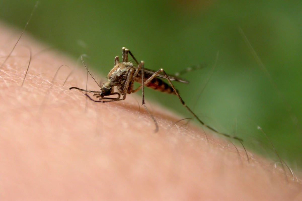 Remedies To Keep Mosquitoes Other Summer Pests From