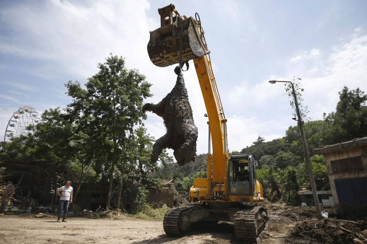 Image: Excavator removes a dead bear at the zoo in Tbilisi