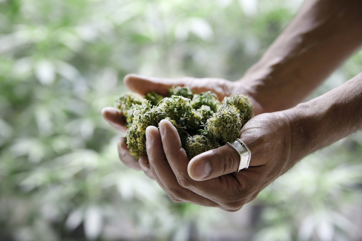 the advocacy to legalize cannabis in australia Australia said on thursday it planned to become the fourth country in the world to  legalize medicinal marijuana exports in a bid to score a piece.