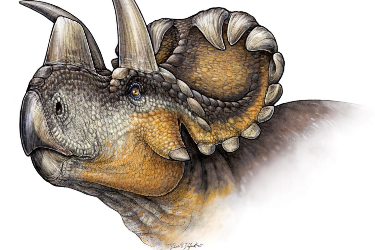 Image: Wendiceratops