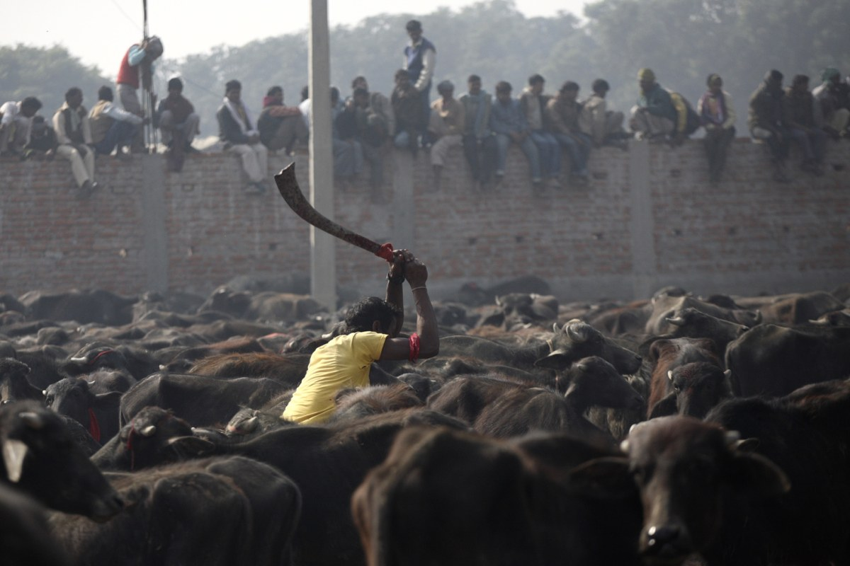 Nepal Will No Longer Host World's Largest Religious Animal ...
