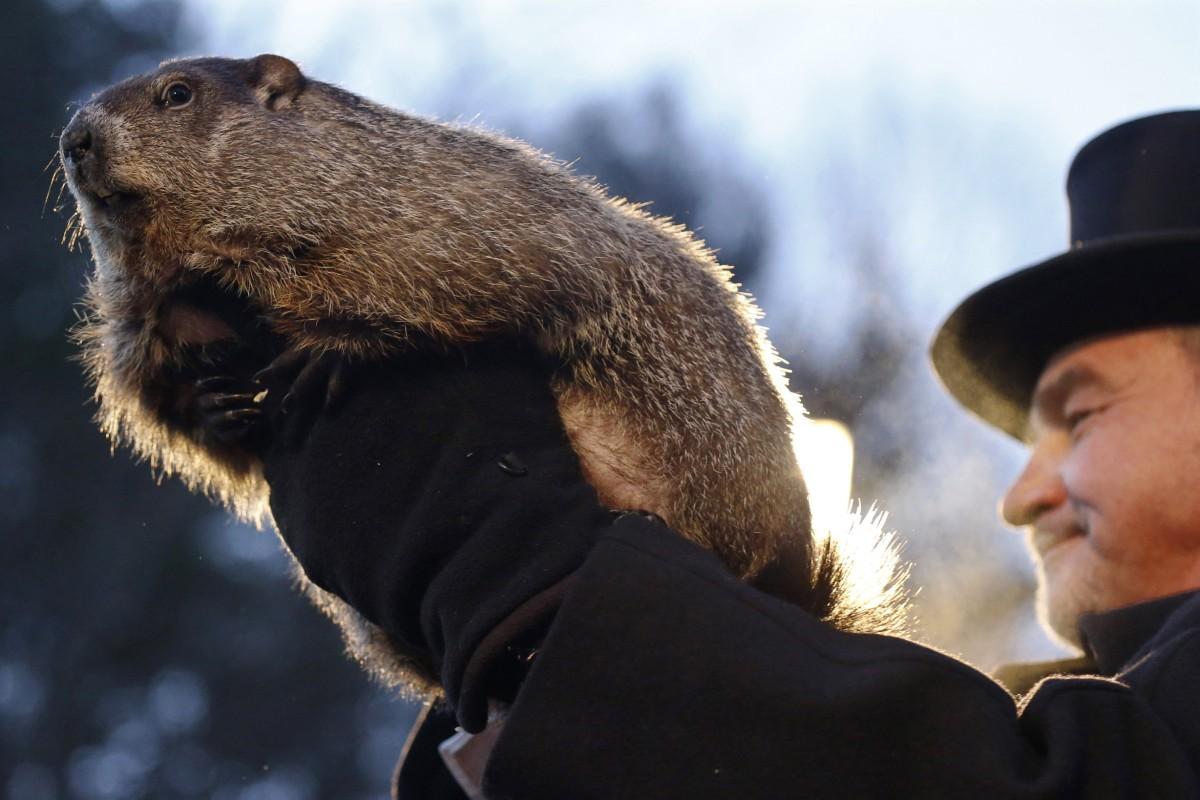 groundhog day punxsutawney phil predicts early spring