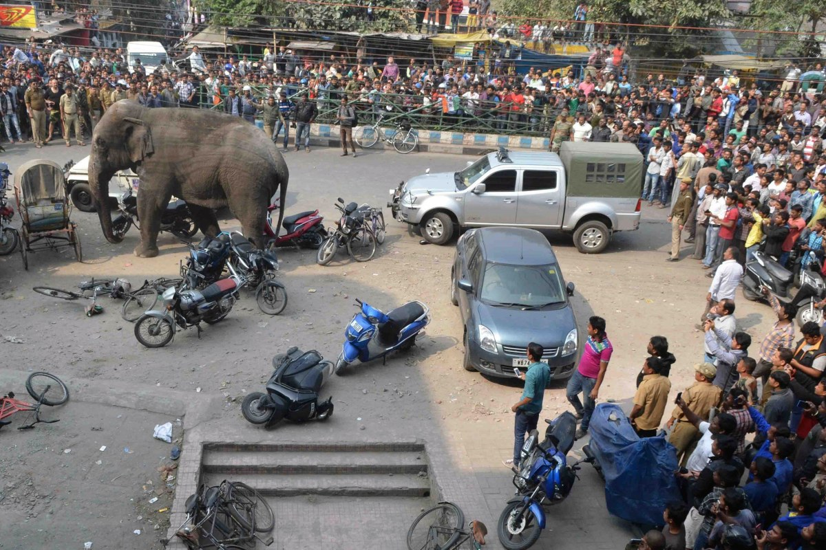 Image: INDIA-WILDLIFE-ELEPHANT-RAMPAGE