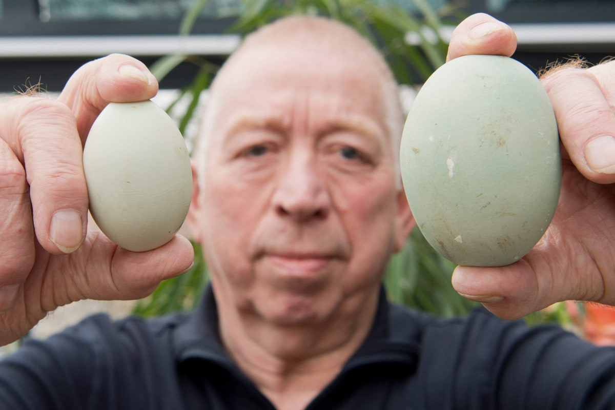 Image: Giant egg in Germany