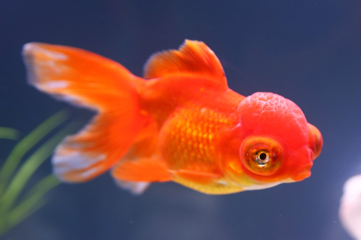 Fish Can Recognize Your Face. Really. - NBC News