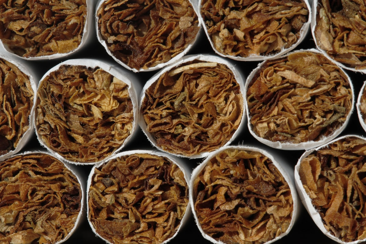 cigarette smoking bible dictionary definitions - Donuville