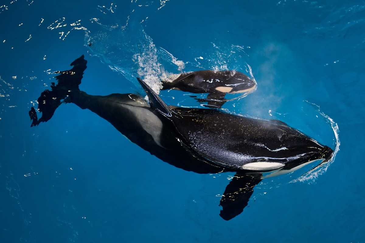 Image: Image: Takara and her calf