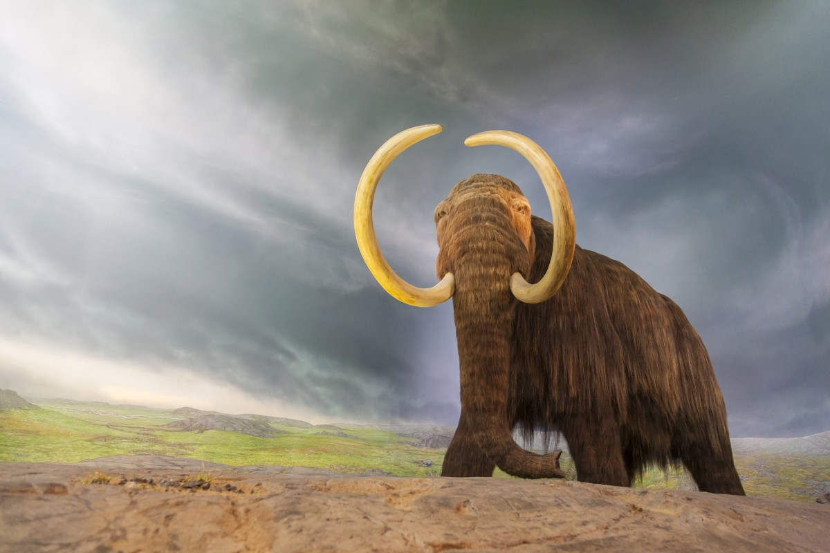 Paleontologists have dug up a 130,000-year-old mastodon skeleton that looks like it was butchered by humans. But they found it in America, where people were not supposed to have arrived for another 100,000 years. Findings could upend our understanding of human history.