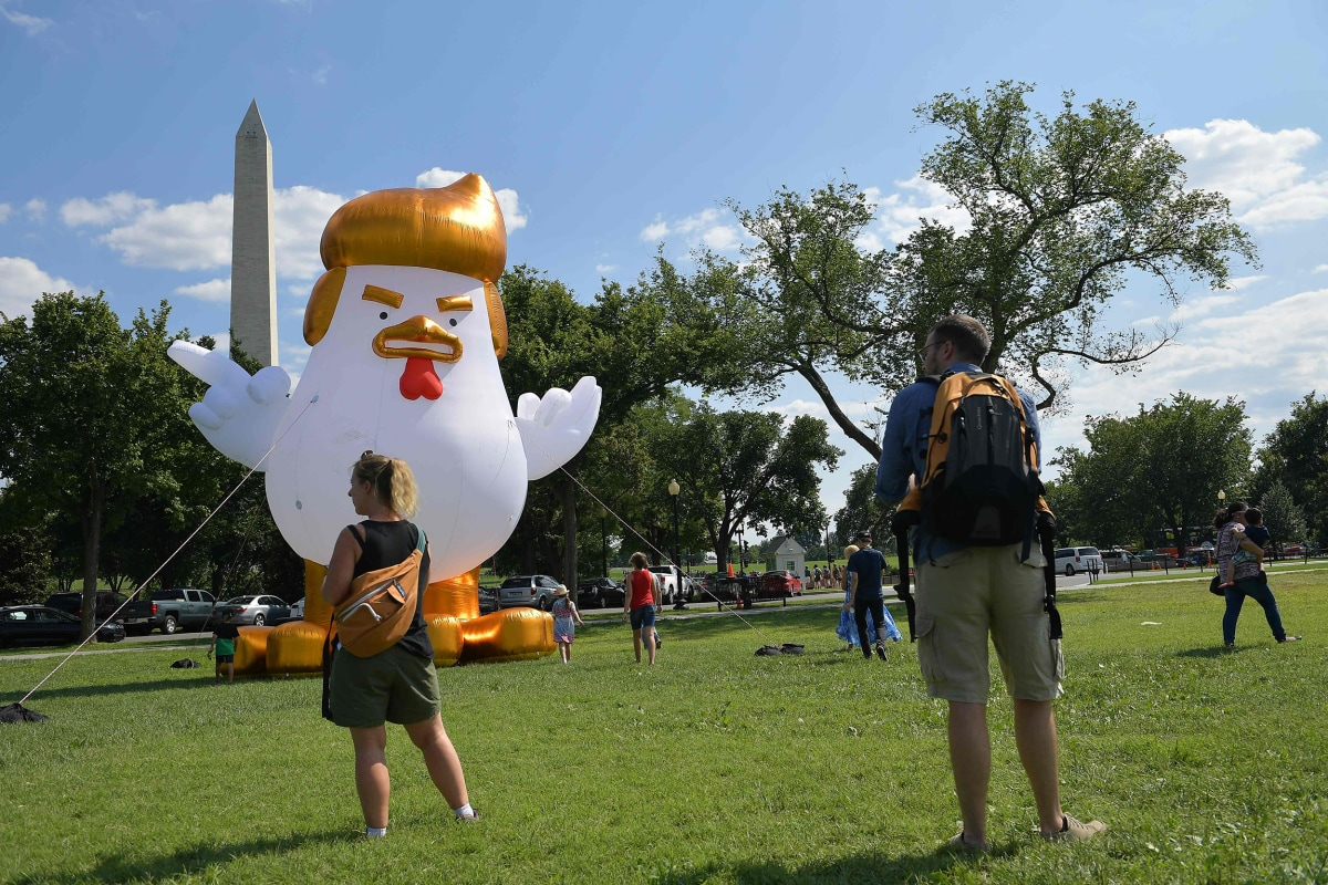inflatable trump chicken takes roost near white house nbc news