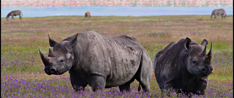 Image: Black rhino in Tanzania's Ngorogoro Crater