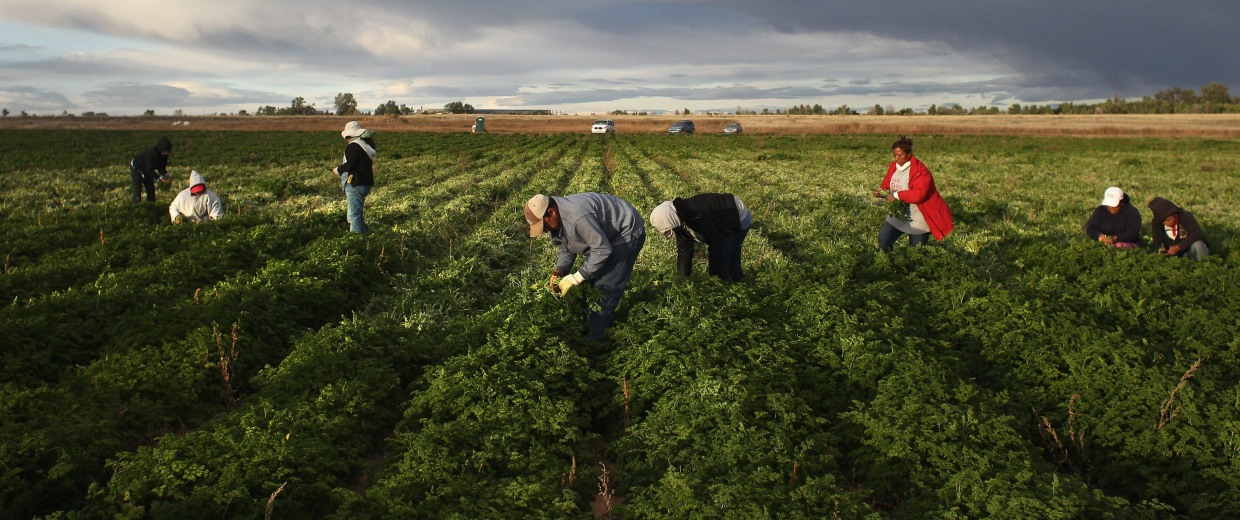 Image: Colorado Farm Suffers As Immigrant Workforce Diminishes