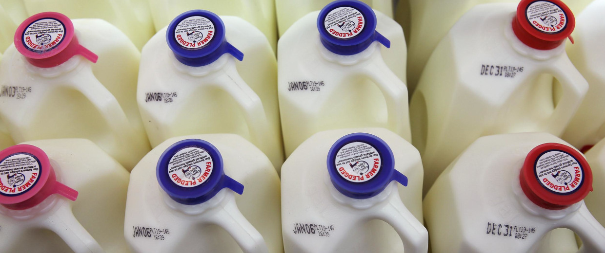 Image: Jugs of milk on a shelf at a grocery store.