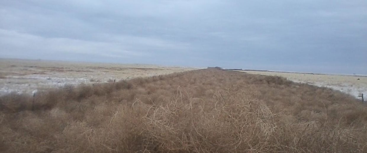 An eight-mile stretch of road completely covered by tumbleweeds in Crowley County, Colorado